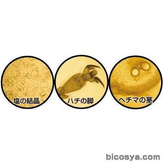 手工制作显微镜