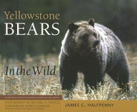 YellowstoneBearsintheWild[JamesC.Halfpenny]
