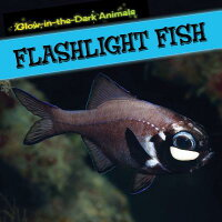FlashlightFish[CaitieMcAneney]