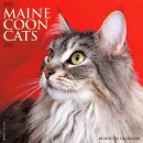 Just Maine Coon Cats