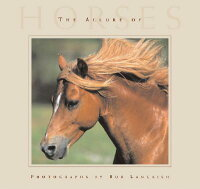 The_Allure_of_Horses