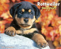 Just_Rottweiler_Puppies_Calend