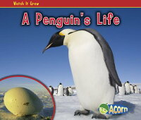 A_Penguin's_Life