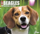 Just Beagles