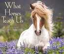 What Horses Teach Us