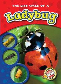 The_Life_Cycle_of_a_Ladybug