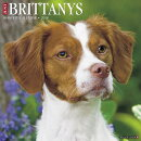 Just Brittanys 2018 Wall Calendar (Dog Breed Calendar)