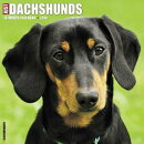 Just Dachshunds 2018 Wall Calendar (Dog Breed Calendar)