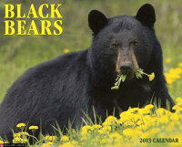 BlackBearsCalendar[WillowCreekPress]