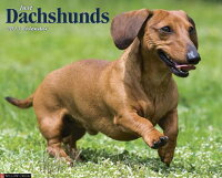 Dachshunds[Willowcreek]