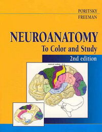Neuroanatomy_to_Color_and_Stud
