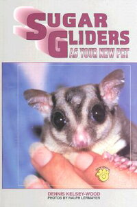 Sugar_Glider_as_Your_New_Pet