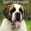 Just Saint Bernards 2018 Wall Calendar (Dog Breed Calendar)