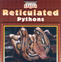 Reticulated_Pythons