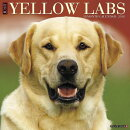 Just Yellow Labs 2018 Wall Calendar (Dog Breed Calendar)