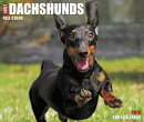 Just Dachshunds 2018 Box Calendar (Dog Breed Calendar)