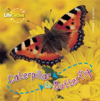 Caterpillar_to_Butterfly