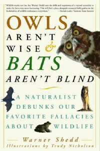 Owls_Aren't_Wise_&_Bats_Aren't