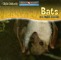 Bats_Are_Night_Animals