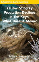 Yellow Stingray Population Declines in the Keys: What Does it Mean?