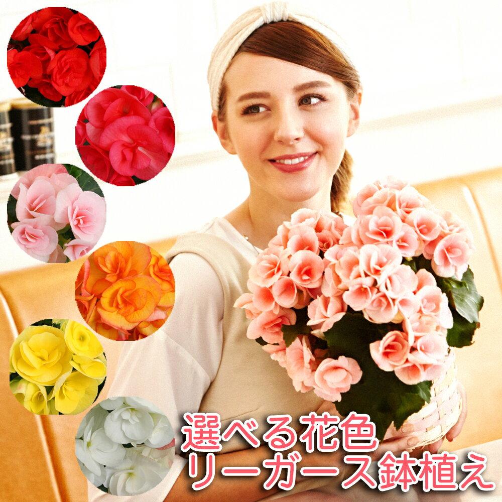 リーガース 鉢植え 花 ギフト 誕生日 お祝い フラワーギフト 女性 プレゼント 送料無料