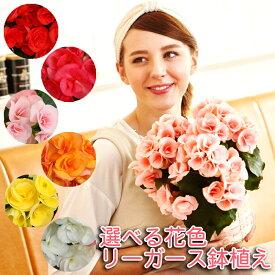 リーガース 鉢植え 花鉢 鉢花 花 ギフト 誕生日 お祝い フラワーギフト 女性 プレゼント