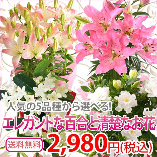 母の日ギフト 選べる母の日花鉢 マザーズピンク シュガーラブ マダガスカルジャスミン ガーデニア 母の日 ギフト 花 送料無料 鉢植え 鉢花 母の日プレゼント