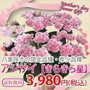 母の日ギフト あじさい きらきら 星母の日 ギフト 花 送料無料 鉢植え 鉢花 母の日プレゼント