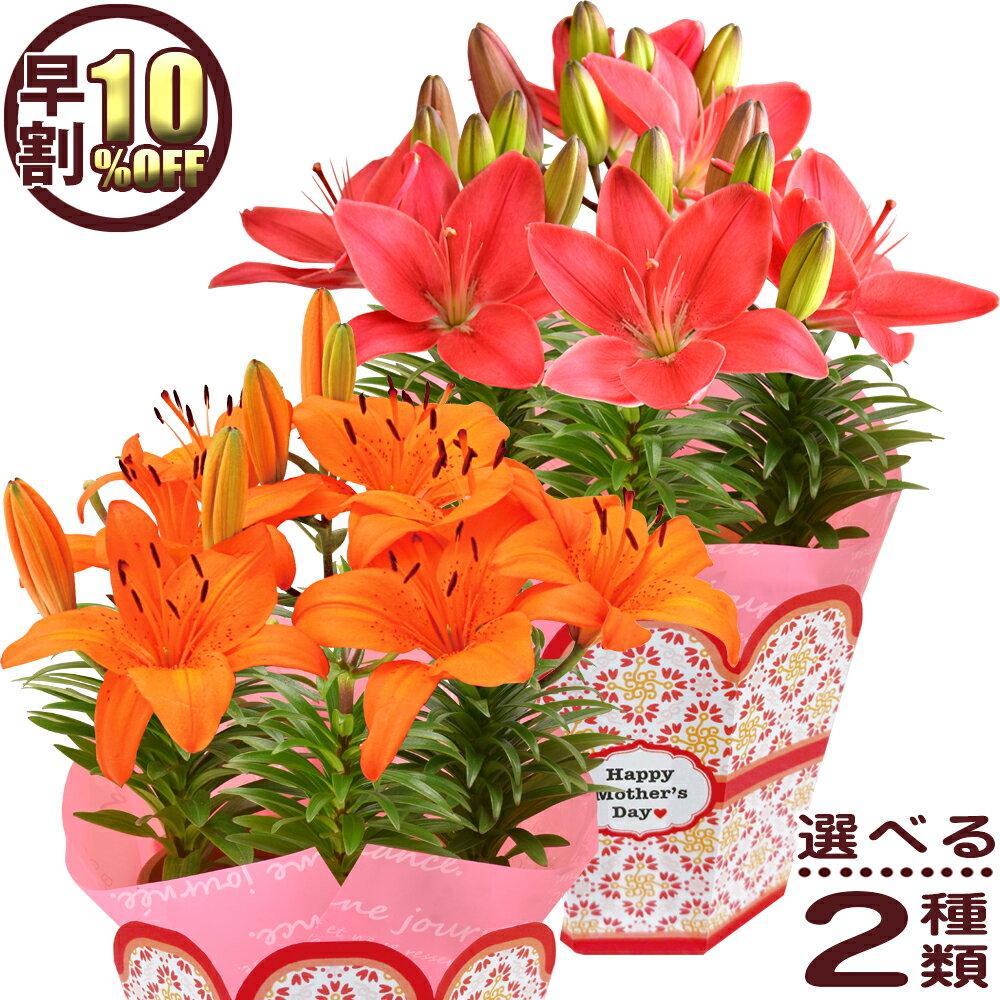 早割10%OFF 母の日 ギフト プレゼント 花 2019 送料無料 百合 花色が選べるお花 母の日プレゼント 鉢植え