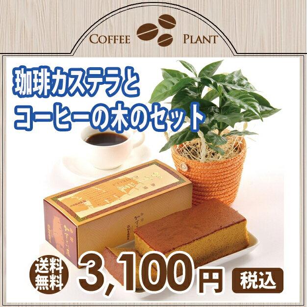 【父の日ギフト2018】コーヒーの木と珈琲カステラのセット 観葉植物 鉢植え 【楽ギフ_メッセ】【RCP】