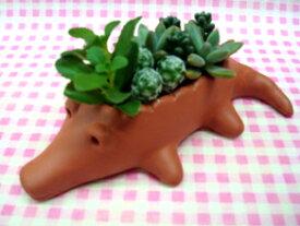 【送料無料】 多肉植物 寄植え 「ワニちゃん♪」 鉢植え ギフト 【楽ギフ_メッセ】 【RCP】