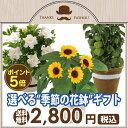 【ポイント5倍!】父の日 ギフト 選べる季節の花鉢5号鉢 鉢植え ひまわり ほおずき ガーデニア 父の日ギフト プレゼント 送料無料