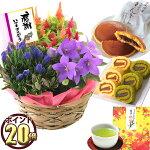 選べる秋の花鉢とスイーツセット