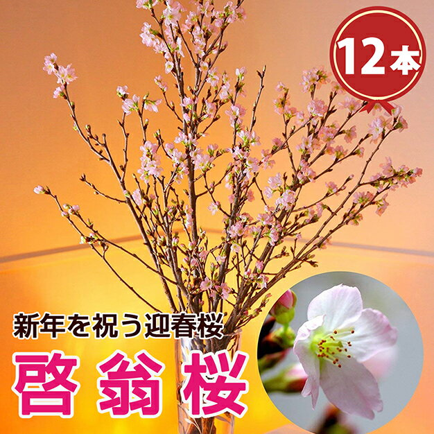 啓翁桜 12本束 正月飾り 正月 歳暮 迎春 冬ギフト 誕生日 花 フラワーギフト ギフト プレゼント 送料無料