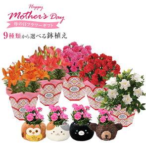 【おかあさん】ありがとうの気持ちを込めて!「母の日」にピクシー百合(オレンジ/チェリーレッド)を贈ってみてはいかがでしょう?送料無料です!