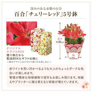【おかあさん】ありがとうの気持ちを込めて!「母の日」にオレンジ百合を贈ってみてはいかがでしょう?送料無料です!