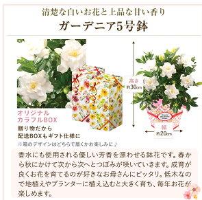 母の日ギフトプレゼント花2019関東送料無料百合花色が選べるお花母の日プレゼント鉢植え