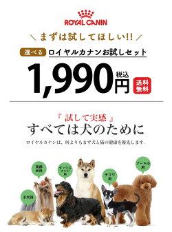 ヨークシャーテリア成犬・高齢犬用800g