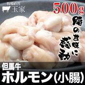 但馬牛ホルモン(小腸)500g(冷蔵)国産牛肉こてっちゃん肉牛肉コテッチャン