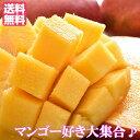 台湾マンゴー 8〜14玉入り 愛文マンゴー 5kg フルーツ 新鮮果実 送料無料 フレッシュマンゴー 台湾玉井 アップル…