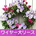 【ワイヤー大セット】花苗で作る ハンギングリース 壁掛け鉢 メッシュタイプ[FMP01-40Gセット]クリスマスリース ビオ…