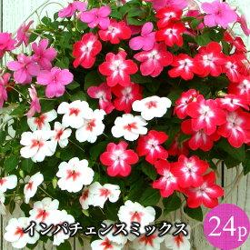 【ポイント3倍】インパチェンス 花苗24ポットミックス セット