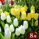 冬咲きミラクル チューリップ 球根 10球入
