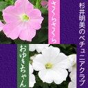 杉井明美のペチュニア『さくらさくら/おゆきちゃん』花苗
