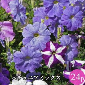 ペチュニア 専門店向け 花苗 24ポットミックス セット[春一年草]