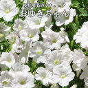 杉井明美の ペチュニア おゆきちゃん 専門店 花苗 3.5号[春苗予約] なごみ