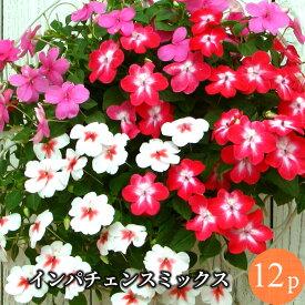 【ポイント3倍】インパチェンス 花苗12ポットミックス セット[春一年草]