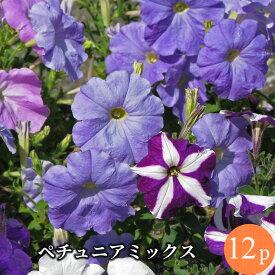 ペチュニア 専門店向け 花苗 12ポットミックス セット[春一年草]