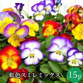 虹色スミレ プレミアム パンジー 花苗 15ポットミックス セット