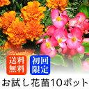 【初回限定 送料無料】お試し 春〜夏の花苗 10ポットミックス